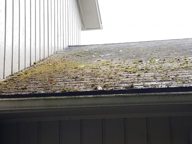Soft wash roof before picture