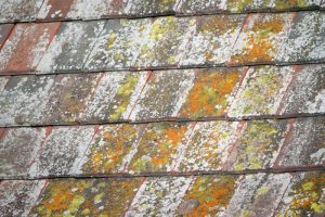 Roof Cleaning Lichens Rochester, NY