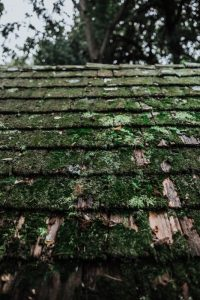 Roof Moss, Roof Cleaning, Rochester, NY